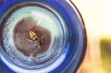 Bee Organized with Pamela