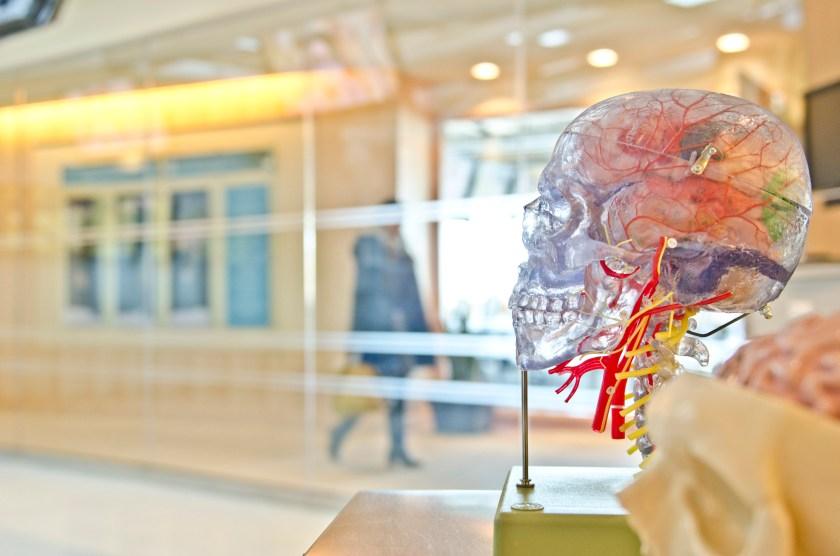 Brain photo-1453847668862-487637052f8a.jpg