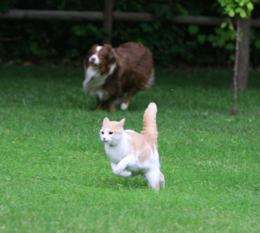 herding-cats-3593274951_0537ffa90c_b