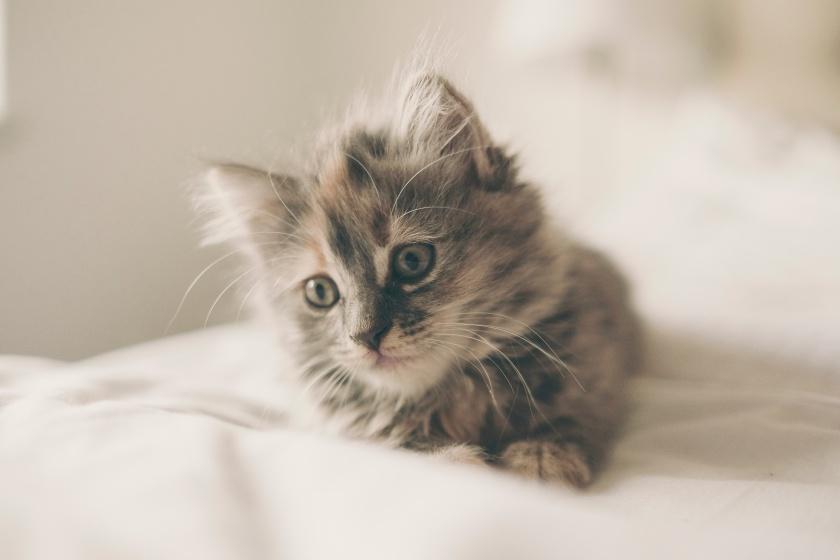 kitten-iyqc9xwmvw4-freddie-marriage