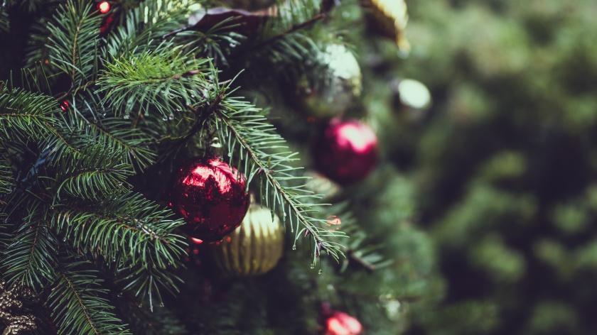 pine-scent-erguyon2vma-tj-holowaychuk