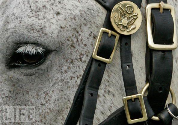 horse-74730690