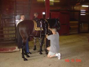 riderless horse-185374878JHGKBX_fs